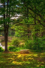 Summer, forest, trees, grass, pond