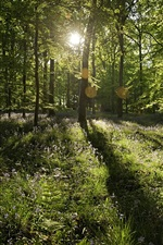 Sunrise in idyllic summer, sun rays, wildflowers, forest