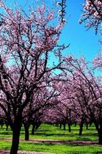 Tree flowers, pink world, spring