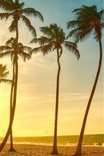 iPhone fondos de pantalla Playa tropical hermosa puesta de sol, palmeras, mar, la gente, la oscuridad