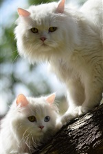Preview iPhone wallpaper Two white cats in tree