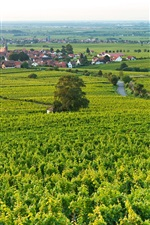 Preview iPhone wallpaper Village, town, fields, houses, green, Edenkoben, Germany