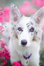 Cão branco no campo flores vermelhas