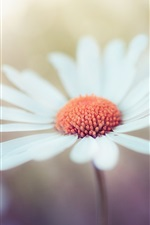 Preview iPhone wallpaper White flower macro photography, bokeh
