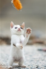 Preview iPhone wallpaper White kitten stand to play game