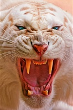 Preview iPhone wallpaper White tiger roaring, big cat close-up