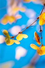 Yellow leaves, twigs, blue background