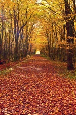 Preview iPhone wallpaper Autumn forest, trees, yellow leaves ground, path