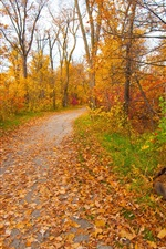 Preview iPhone wallpaper Autumn, park, forest, trees, yellow leaves, path