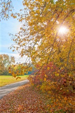 Preview iPhone wallpaper Autumn park, path, trees, sun rays