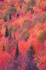 Preview iPhone wallpaper Autumn red forest, trees, slope