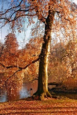 Autumn, trees, yellow leaves, river