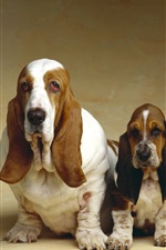 Preview iPhone wallpaper Basset Hound, three dogs