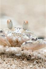 Beach, sand, crab, Thailand