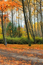Beautiful autumn park, trees, leaves, bench