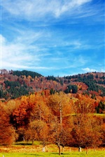 Preview iPhone wallpaper Beautiful autumn season, trees, grass, blue sky