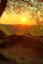 Beautiful morning sunrise, wood, tree, twigs, leaves