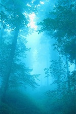 Preview iPhone wallpaper Blue forest, fog, trees, dawn