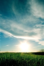 Preview iPhone wallpaper Blue sky, clouds, grass, sunset