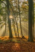 Preview iPhone wallpaper Brugge, Belgium, forest in autumn, sun rays