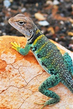 Preview iPhone wallpaper Colorful lizard, gecko, stone, bokeh