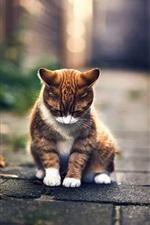 Preview iPhone wallpaper Cute cat rest, bokeh