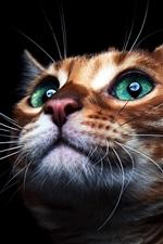 Preview iPhone wallpaper Cute kitten face, green eyes, black background
