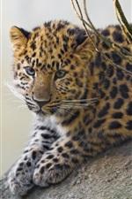 Preview iPhone wallpaper Cute leopard cub