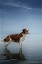 Preview iPhone wallpaper Dog standing at coast, sea, water, dusk