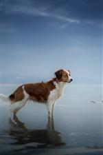 Dog standing at coast, sea, water, dusk