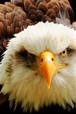 Preview iPhone wallpaper Eagle front view, eyes, beak, feathers