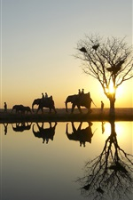 Preview iPhone wallpaper Elephants in safari park at sunset