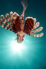 Preview iPhone wallpaper Flying fish, lionfish, sun rays, underwater
