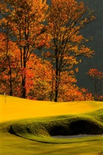 Preview iPhone wallpaper Forest, trees, grass, lawn, golf, autumn