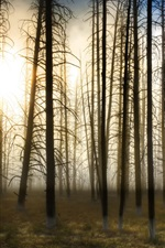 Preview iPhone wallpaper Forest trees in sunshine, grass, fog