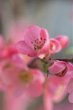 Preview iPhone wallpaper Garden flowers macro photography, pink petals
