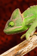 Preview iPhone wallpaper Green chameleon, animals photography