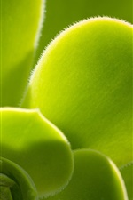 Green plants close-up, leaves, villi