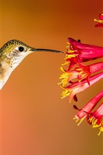 Preview iPhone wallpaper Hummingbird flying, red flowers