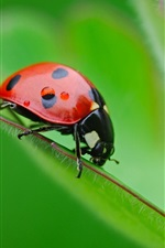 Preview iPhone wallpaper Insect ladybug, green leaf, bokeh