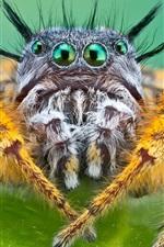 iPhone fondos de pantalla araña de insectos fotografía macro