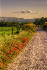 Preview iPhone wallpaper Italy, nature scenery, road, fields, trees, clouds, dusk