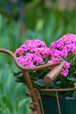 Preview iPhone wallpaper Kalanchoe flowers, bike basket