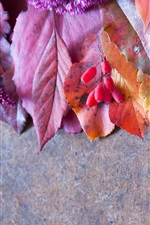 Preview iPhone wallpaper Leaves, berries, flowers, still life photography