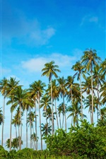 Preview iPhone wallpaper Malaysia, Bohey Dulang Island, palm trees, grass, blue sky