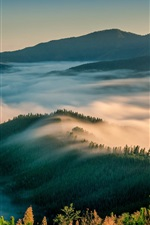 Preview iPhone wallpaper Morning nature landscape, mountains, trees, fog