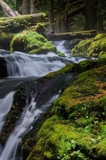 Preview iPhone wallpaper Nature landscape, waterfall, trees, moss