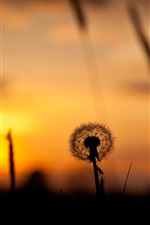 Preview iPhone wallpaper Nature sunset, grass, dandelion, silhouette, red sky