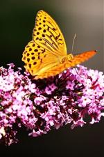 Preview iPhone wallpaper Orange wings butterfly, pink little flowers