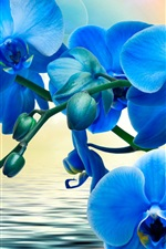 Preview iPhone wallpaper Orchids, blue flowers, phalaenopsis, water